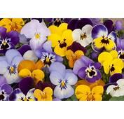 Quelles Fleurs R&233sistent &224 Lhiver