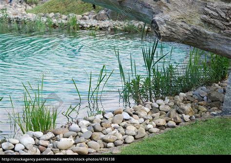 Garten Teich Pflanzen by Wasserpflanze Jungpflanze Pflanze Gartenteich Ufer Stock