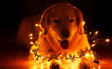 christmas wallpaper with animals dog christmas light desktop background hd 2560x1600