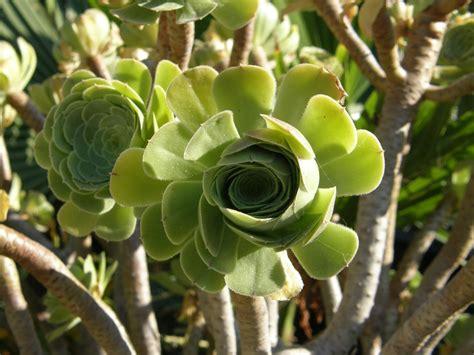 file strange plant jpg wikimedia commons