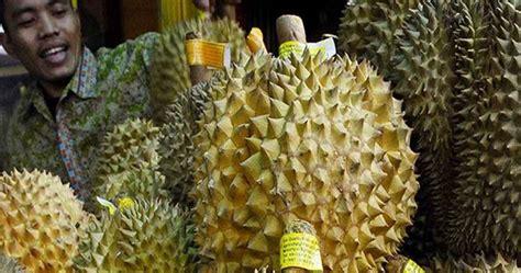 Cari Bibit Durian Musang King Di Medan durian montong banyumas bibit durian montong unggul