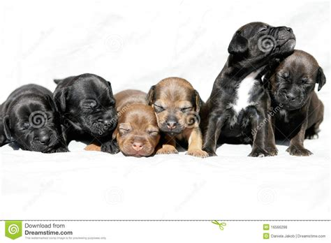 puppies snuggling snuggling puppies royalty free stock photos image 16566298