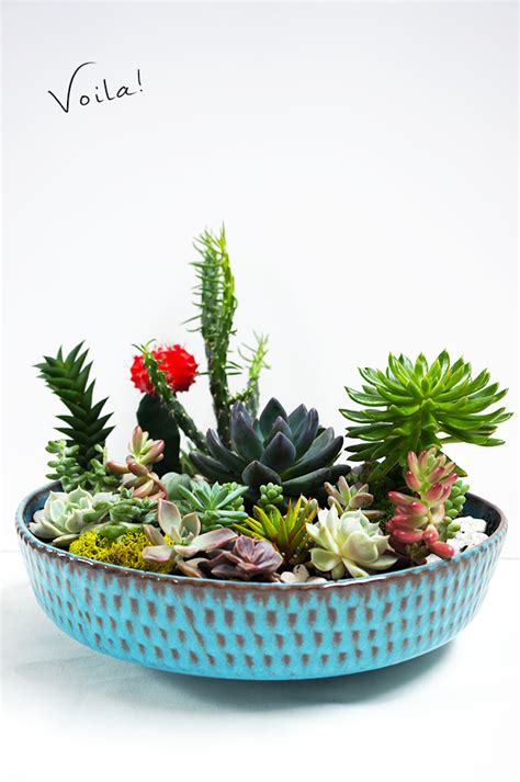 cactus planters how to make a succulent garden diy quinncooperstyle com