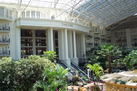 opryland hotel gardens reviews nashville tn attractions