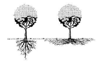 design lab okeechobee tree roots roots and root structure on pinterest