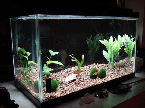 cool aquarium decorations  simple design cheap