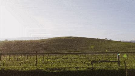 wallpaper gif windows xp the story behind the most viewed image in the world the