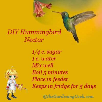 diy home made hummingbird nectar 1667164 diy home made