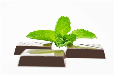 chocolate mint mint chocolates recipe pastry chef author eddy van damme