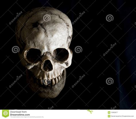 face of human skull in shadow stock image image of view
