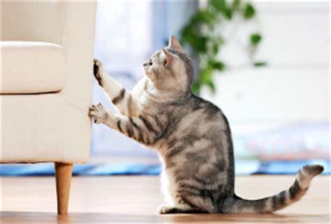 tappezzeria gatti a proposito de cappucci per unghie softclaws 174 www e
