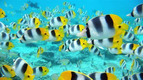 wallpaper for desktop fish tropical fish backgrounds wallpaper cave