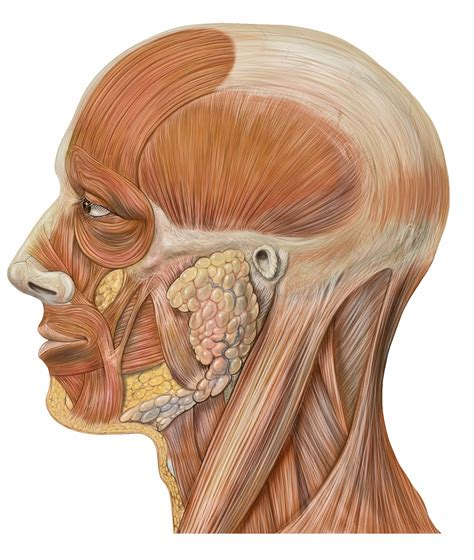 Sporcle Periodic Table Muscles Quiz By Bef 0110