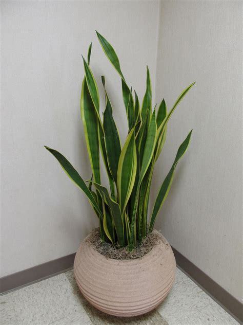 plant indoor re potting indoor plants what grows there hugh conlon horticulturalist professor