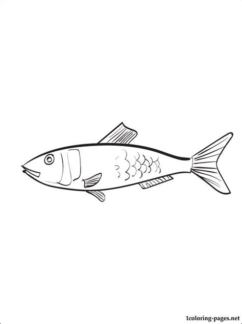 herring fish coloring page herring fish coloring page coloring pages
