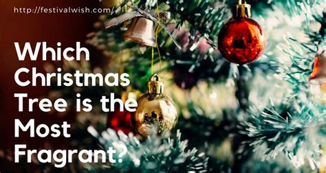 which christmas tree is the most fragrant the best