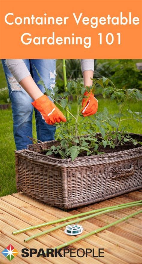 Container Vegetable Gardening Florida 20 Best Landscaping Images On Florida