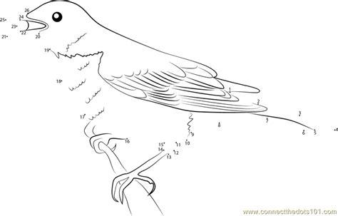 creative birds dot to dot coloring books bird coloring pages to color coloring pages