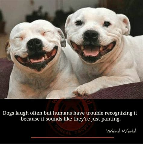 Dog Laughing Meme - dog laughing meme laughing free download funny cute memes