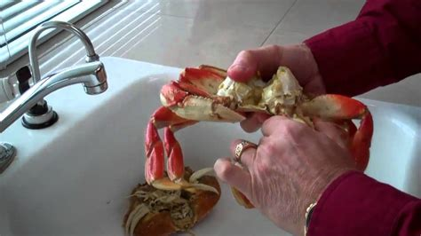How Do I Clean A by How To Clean A Crab