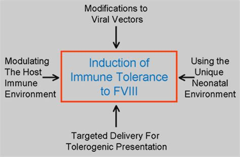 immune tolerance induction wiki untitled document www path queensu ca