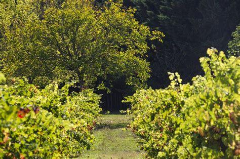 Chambre D Hotes En Dordogne by Chambres D H 244 Tes En P 233 Rigord