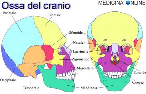 test di anatomia cranio e base cranica ossa anatomia e funzioni