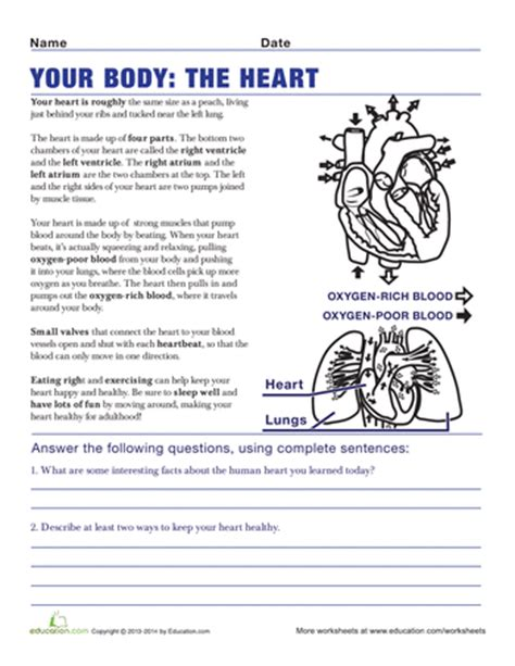 8th Grade Health Homework by Understanding The Human 5th Grade Worksheets