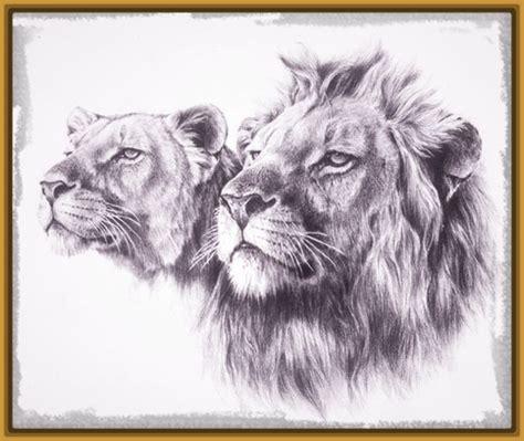 imagenes de leones chidos leones dibujos a lapiz www imgkid com the image kid