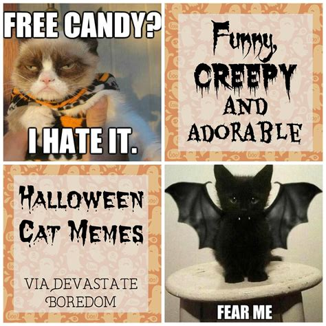 Halloween Cat Meme - funny halloween cats for a laugh fridayfrivolity