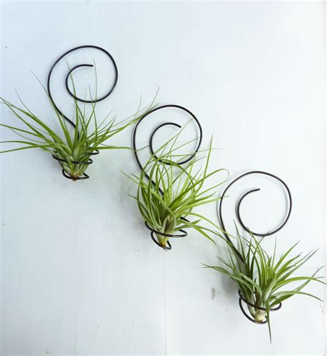 air plant wall holder reserved for shannon0401 three wire air plant holders by