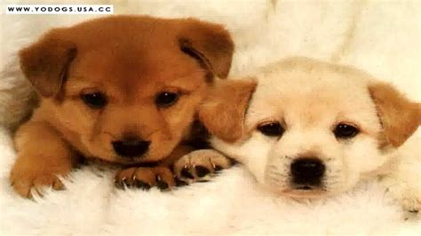 most cutest puppies most beautiful puppies cutest babies photos collection