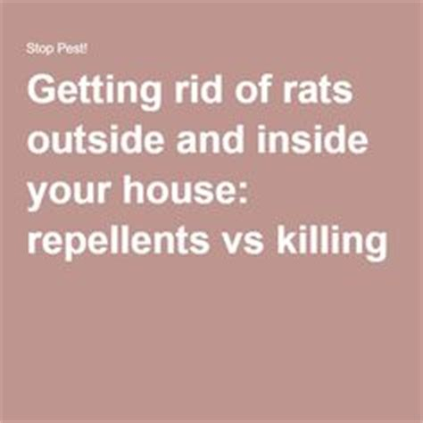 how to get rid of mice in basement the wrong way vs the right way to remove rats from your