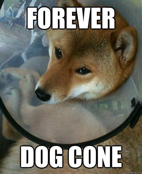 Cone Of Shame Meme - weekend pickthrough broke 207