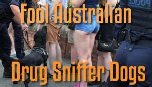 how to conceal drugs from a sniffer how to fool australian sniffer dogs use a lead pouch