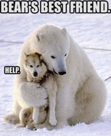 Dancing Polar Bear Meme - polar bear meme 100 images polar bear meme by