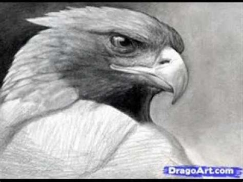 best pencil in the world for drawing how to draw the best realistic eagle in the world 2013