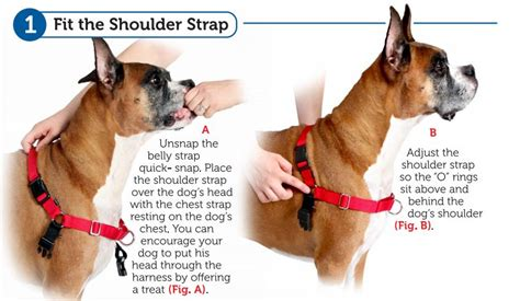 easy walk harness how to fit the easy walk 174 harness petsafe 174 articles