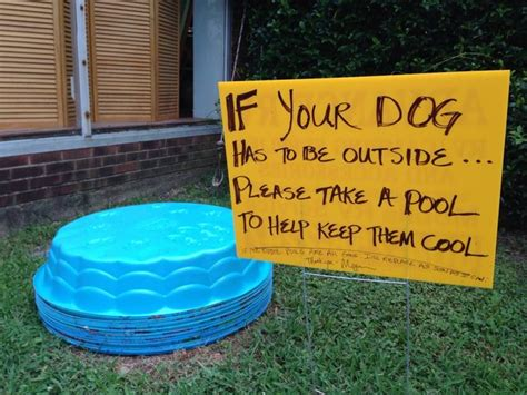 kiddie pool for dogs offers free kiddie pools to owners to keep their pets cool in the heat