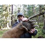 Top 10 Biggest Bears In The World