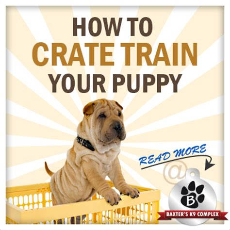 how to crate my puppy how to crate a puppy at baxter s k9 complex
