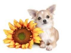 can dogs eat pumpkin seeds pumpkin for dogs 101 can dogs eat pumpkin or is it bad for dogs