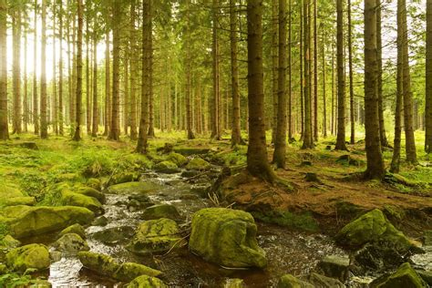 a forest the incredible moving forest jstor daily