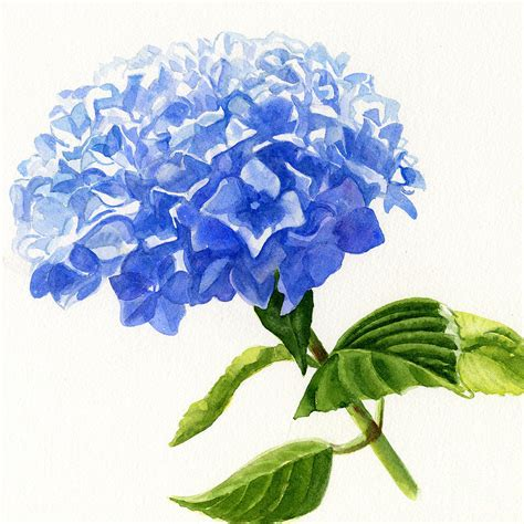 Acrylic Square Vase Blue Hydrangea Square Design Painting By Sharon Freeman