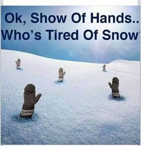 how snow memes are helping me keep my sanity not always