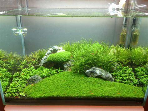 aquascape shrimp tank post your shrimp tanks pinteres