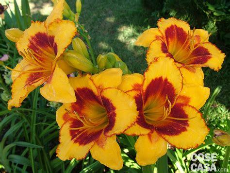 fiori in fiori d estate per il giardino cose di casa