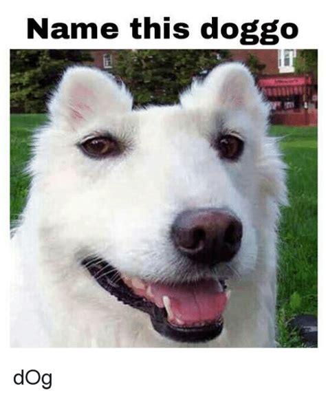 doggo dog dank meme  meme