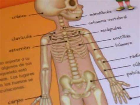imagenes educativas del cuerpo humano los huesos del cuerpo humano ni 241 o de cinco a 241 os youtube