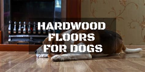 Best Hardwood Floors For Dogs How To Select The Best Hardwood Floors For Dogs Repairdaily